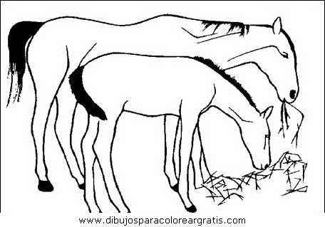 animales/cavallos/cavallos_09.JPG