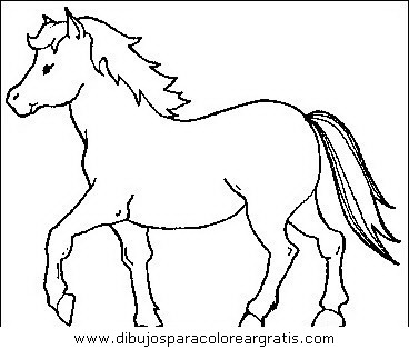 animales/cavallos/cavallos_11.JPG