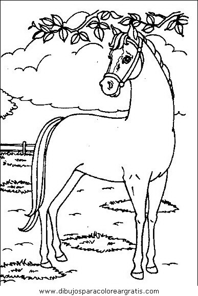 animales/cavallos/cavallos_18.JPG