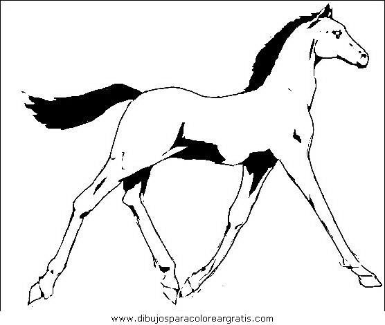 animales/cavallos/cavallos_21.JPG