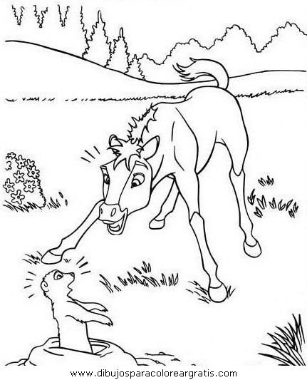 animales/cavallos/cavallos_51.JPG