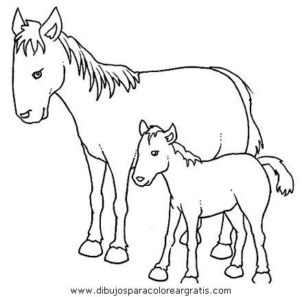 animales/cavallos/cavallos_54.JPG