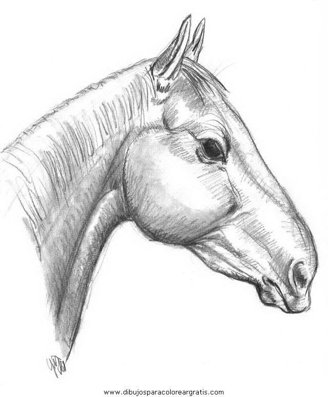 animales/cavallos/cavallos_75.JPG