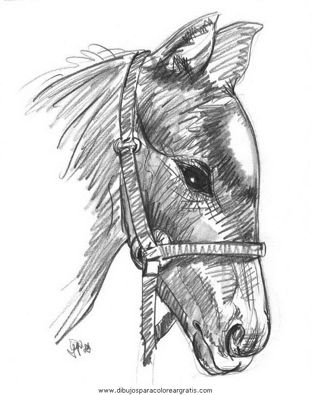 Animales cavallos 76 for Disegni da colorare dei cavalli