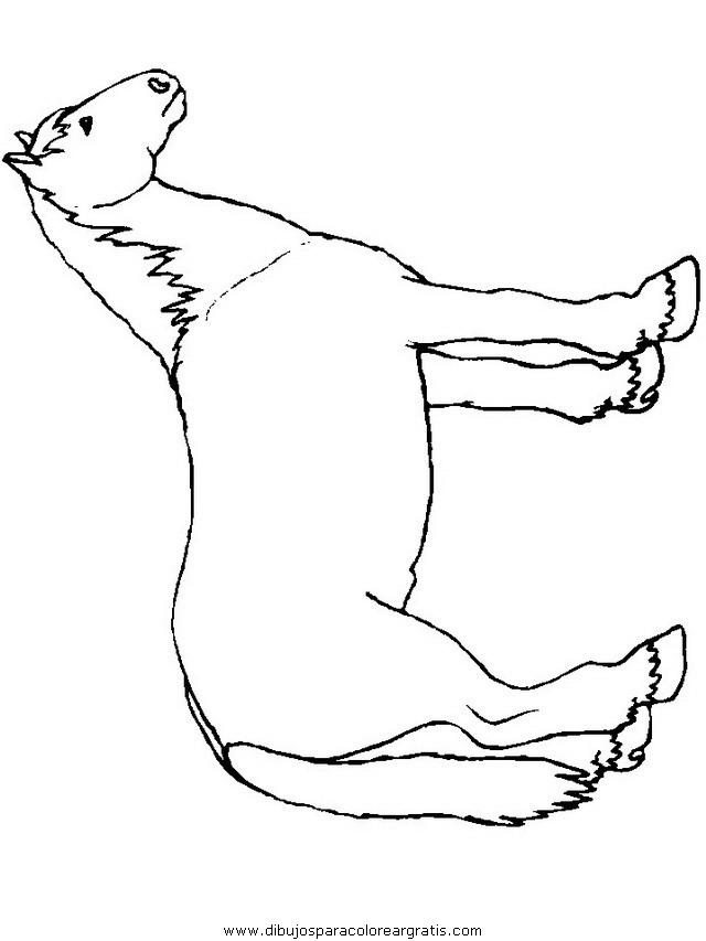 animales/cavallos/cavallos_83.JPG