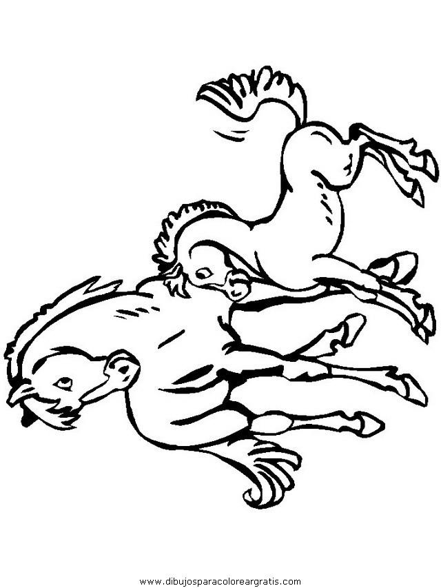 animales/cavallos/cavallos_85.JPG