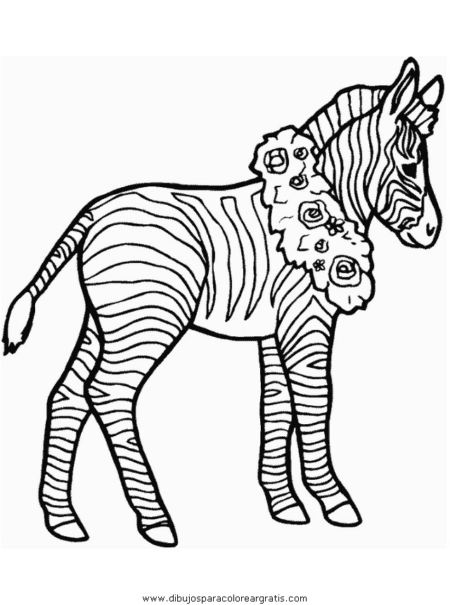 animales/cebras/cebras_06.JPG