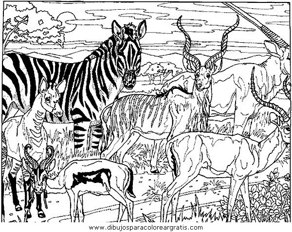 animales/cebras/cebras_08.JPG