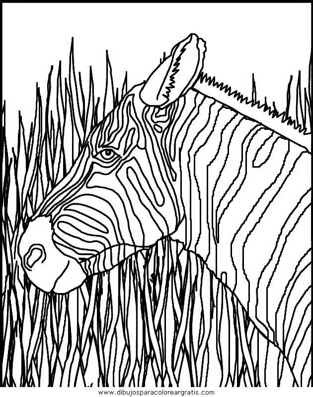animales/cebras/cebras_10.JPG