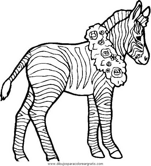 animales/cebras/cebras_13.JPG