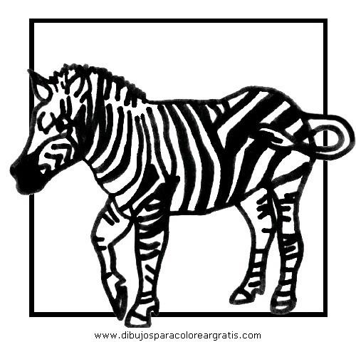 animales/cebras/cebras_15.JPG
