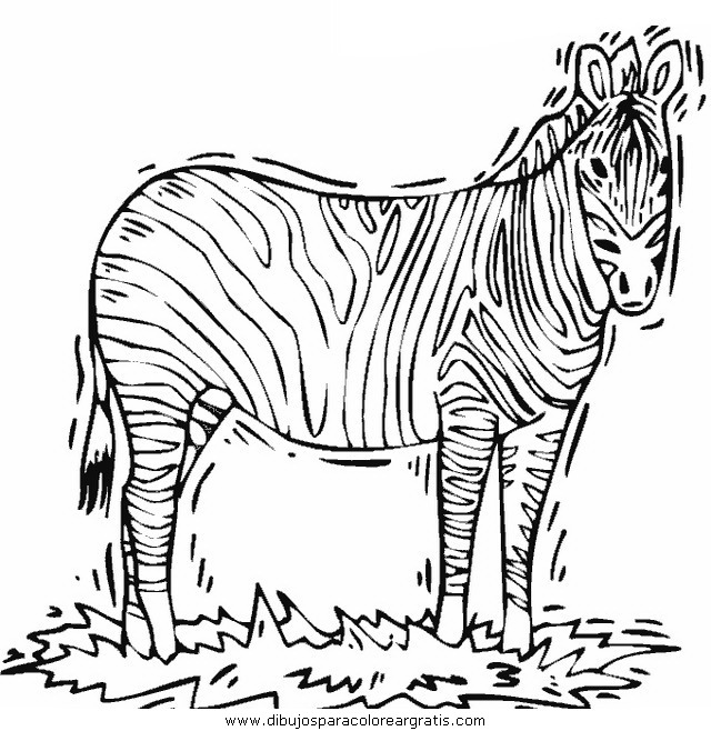animales/cebras/cebras_19.JPG