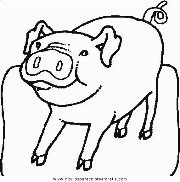 animales/cerdos/cerdos_09.JPG