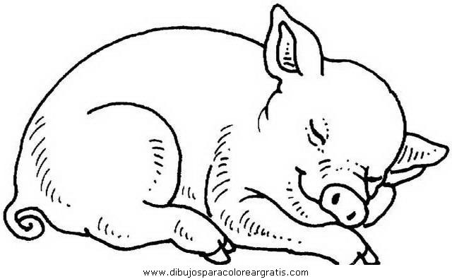 animales/cerdos/cerdos_25.JPG