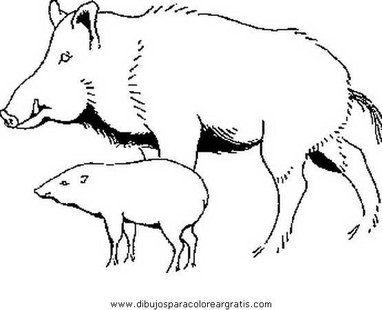 animales/cerdos/jabali_2.JPG