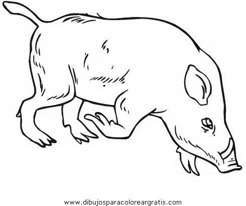 animales/cerdos/jabali_3.JPG