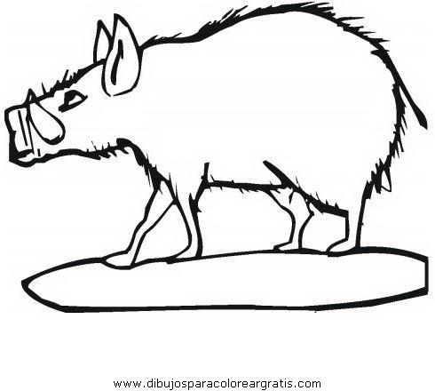 animales/cerdos/jabali_6.JPG