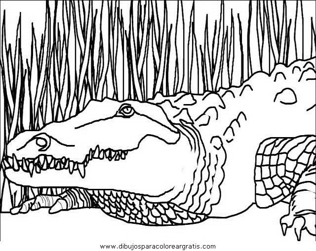 animales/cocodrilos/cocodrilos02.JPG