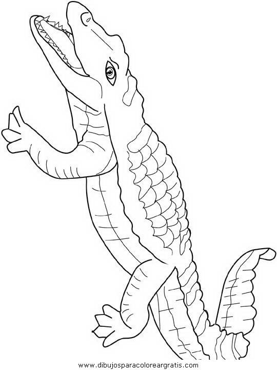 animales/cocodrilos/cocodrilos04.JPG