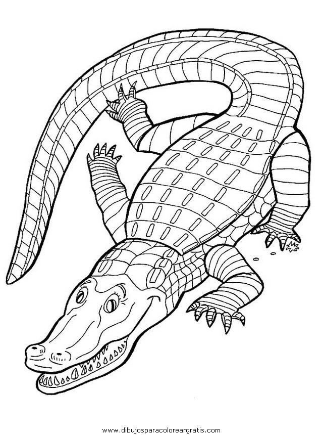 animales/cocodrilos/cocodrilos05.JPG