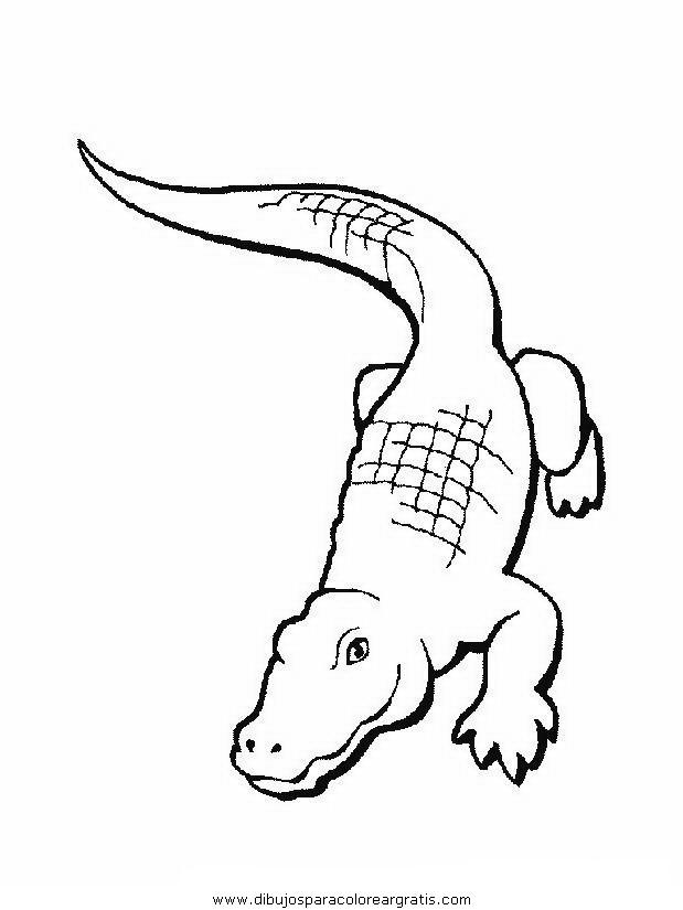 animales/cocodrilos/cocodrilos11.JPG