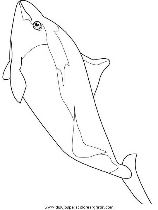 animales/delfines/delfines_22.JPG