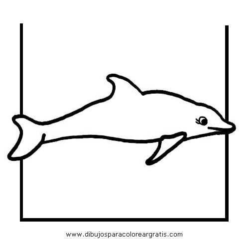 animales/delfines/delfines_32.JPG