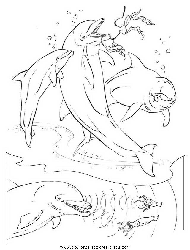 animales/delfines/delfines_36.JPG