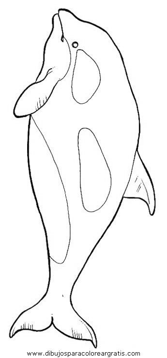 animales/delfines/delfines_48.JPG