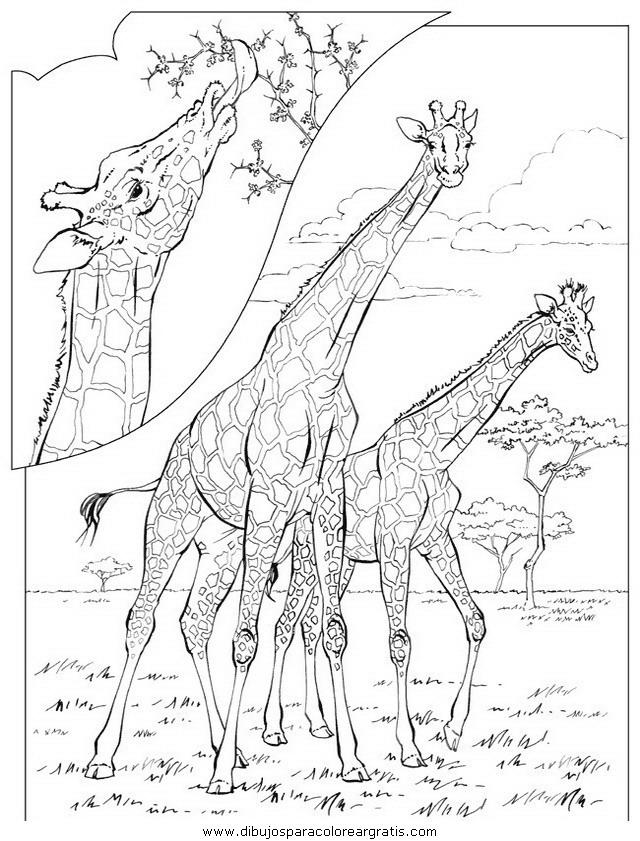 animales/elefantes/elefantes_11.JPG