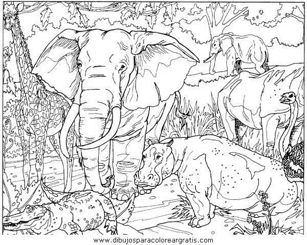 animales/elefantes/elefantes_15.JPG