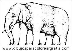 animales/elefantes/elefantes_34.JPG