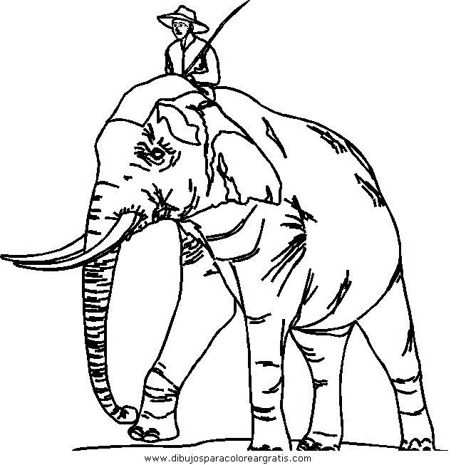 animales/elefantes/elefantes_51.JPG