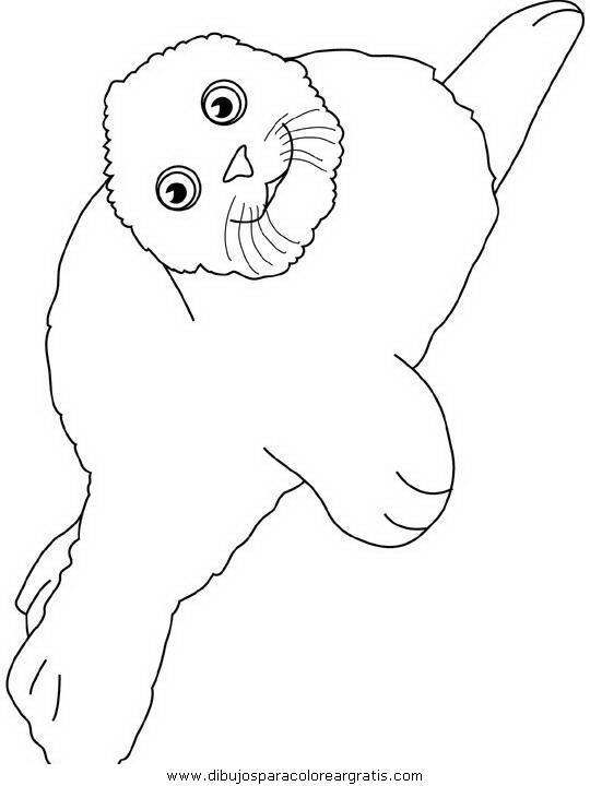 animales/focas/focas_07.JPG