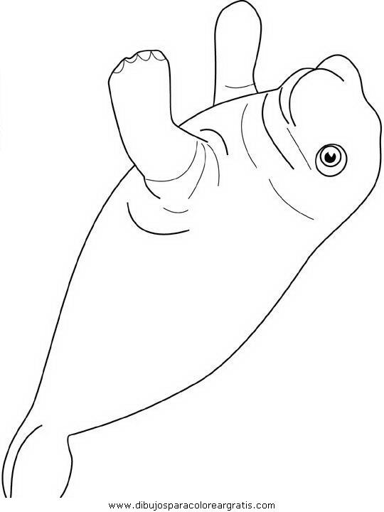 animales/focas/focas_08.JPG
