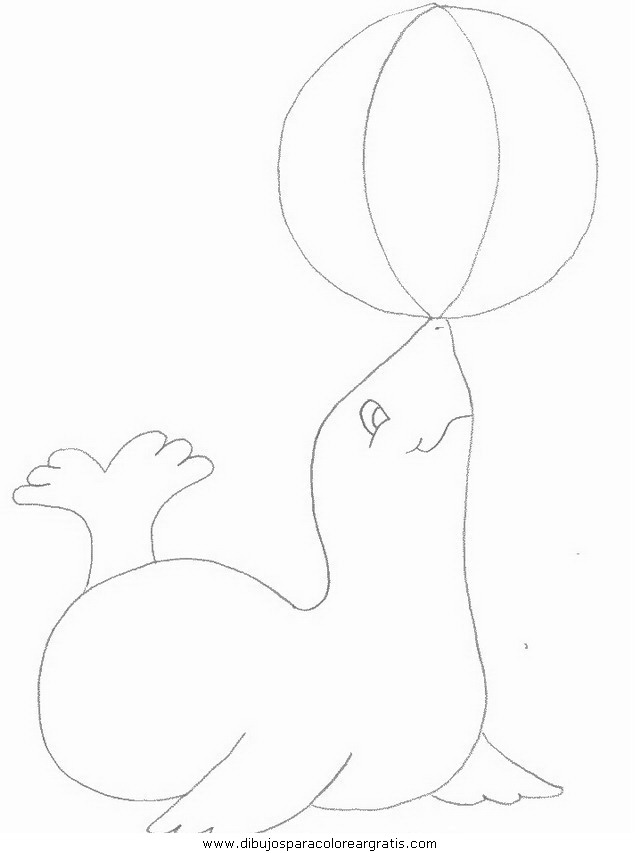 animales/focas/focas_10.JPG