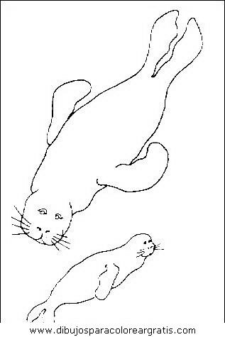 animales/focas/focas_27.JPG
