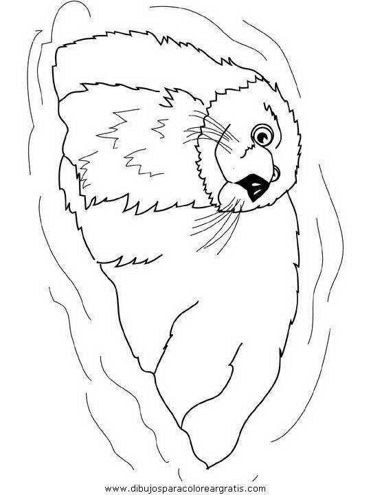 animales/focas/focas_30.JPG