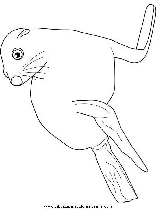 animales/focas/focas_31.JPG