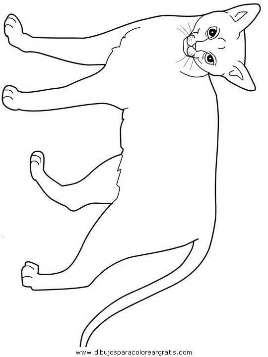 animales/gatos/gatos_000.JPG