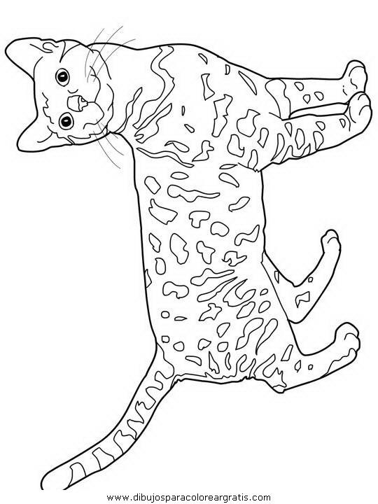 animales/gatos/gatos_001.JPG