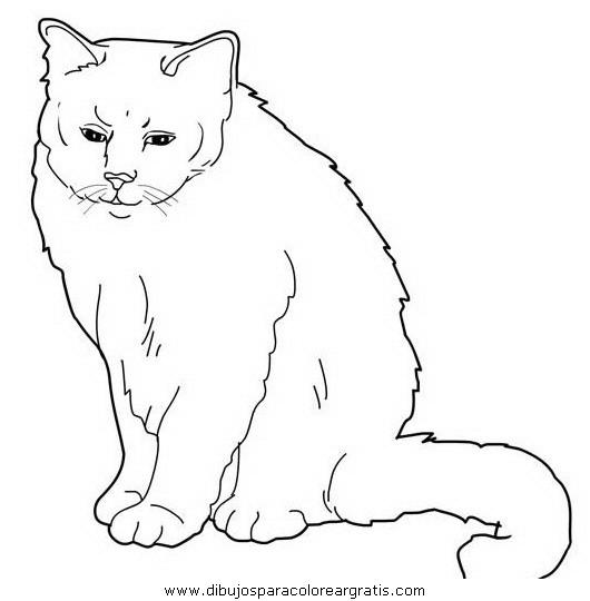 animales/gatos/gatos_002.JPG
