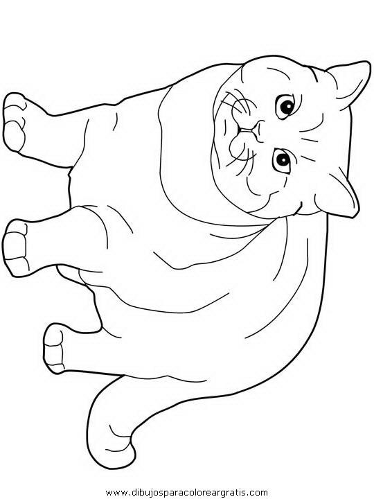 animales/gatos/gatos_003.JPG