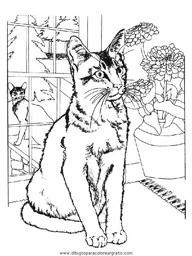 animales/gatos/gatos_013.JPG