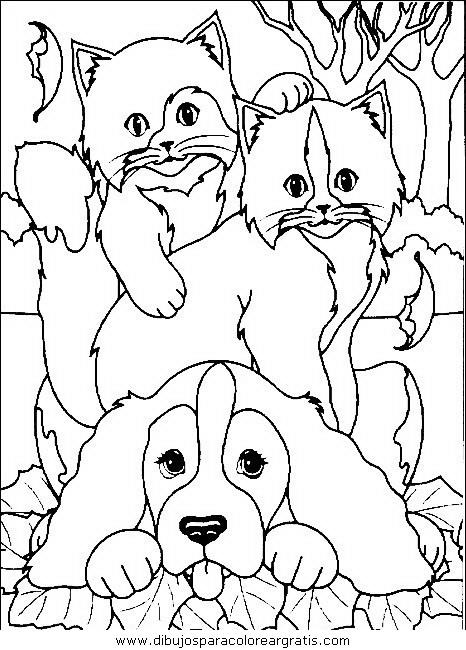 animales/gatos/gatos_028.JPG