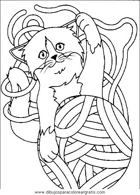 animales/gatos/gatos_031.JPG