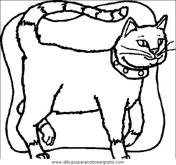 animales/gatos/gatos_033.JPG