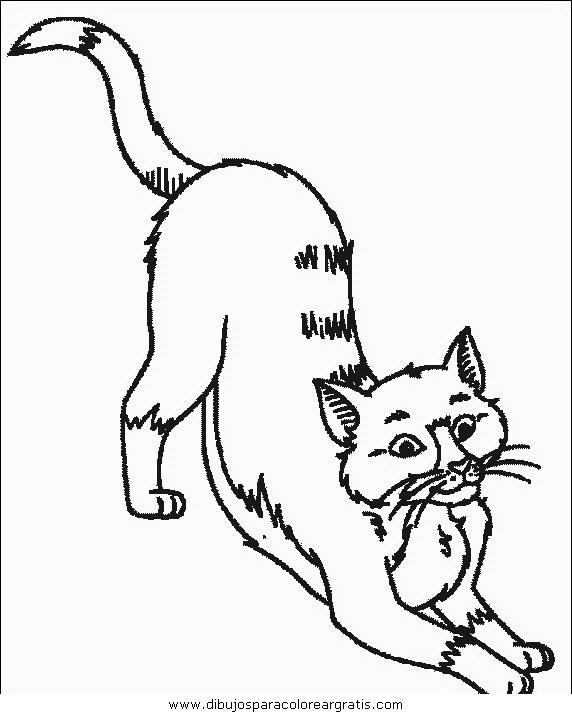 animales/gatos/gatos_044.JPG