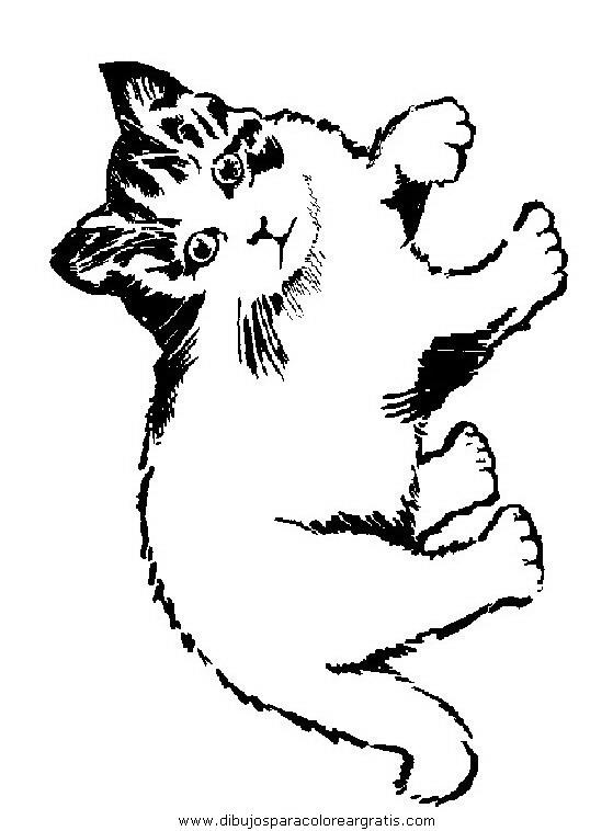 animales/gatos/gatos_061.JPG