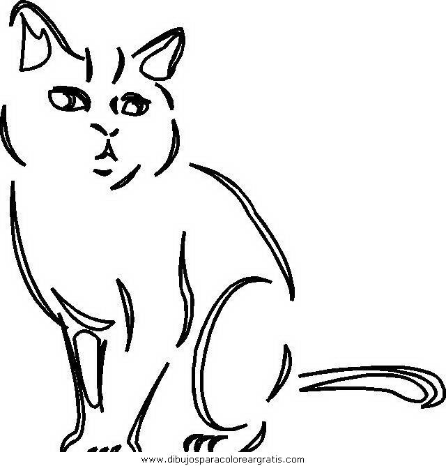 animales/gatos/gatos_064.JPG